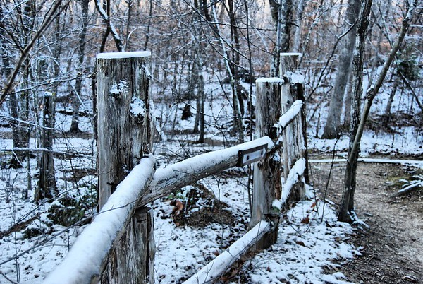 Duke_Forest_in_the_Snow