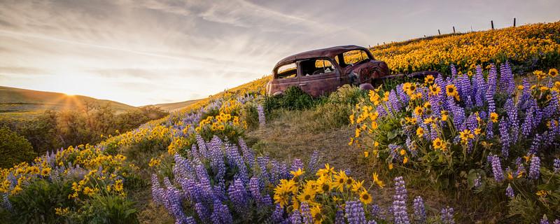 Dalles Mountain Road April 2016-99_100_101_102_103-Edit.jpg