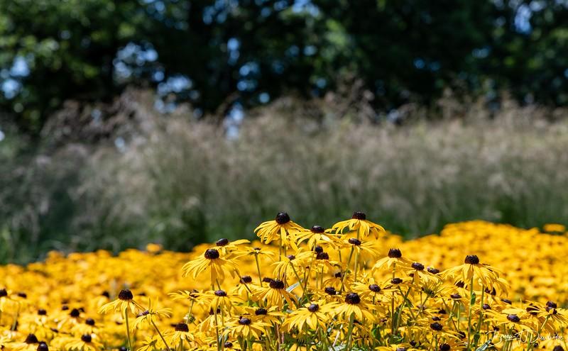 850_Sussex Prairie Gardens-8502662.jpg