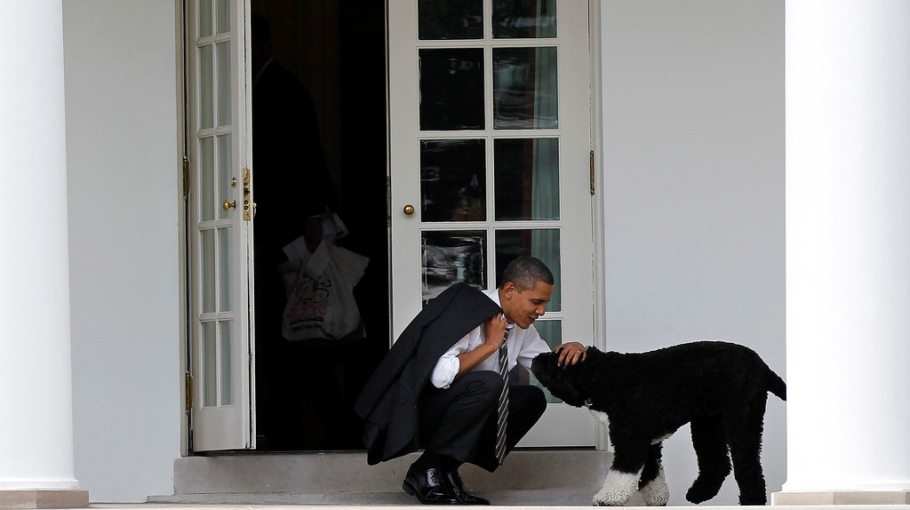 . In this March 15, 2012 file photo, President Barack Obama pets the family dog Bo, a Portuguese water dog, outside the Oval Office of the White House in Washington. (AP Photo/Pablo Martinez Monsivais, File)