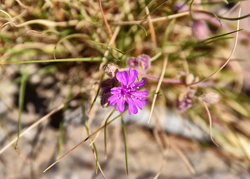 NEA_0355-7x5-Flower.jpg