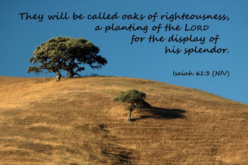 23_Isaiah61-3_KH_2010-8-6.jpg
