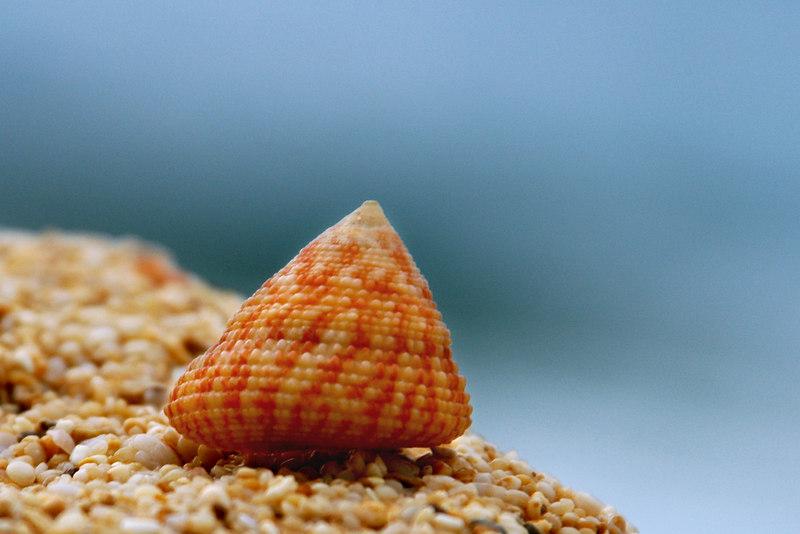 small shell.jpg