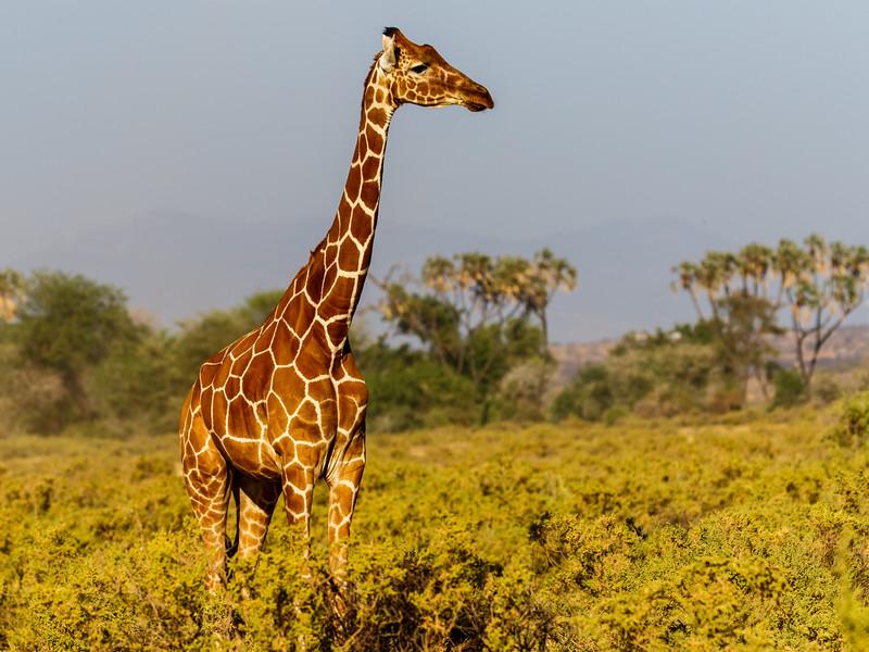 Kenya 2015-02354.jpg