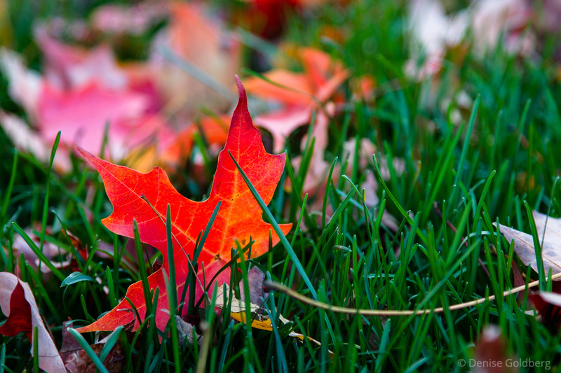 a leaf in the grass
