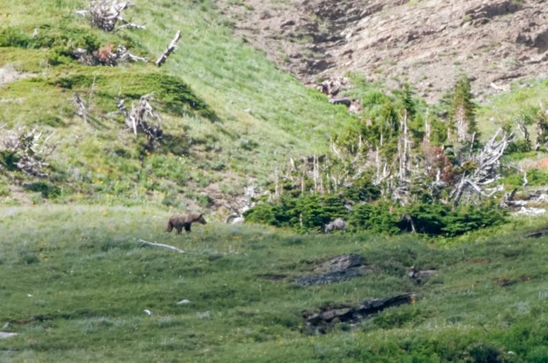 Im Park haben wir dann in der Ferne einen Grizzly gesehen.
