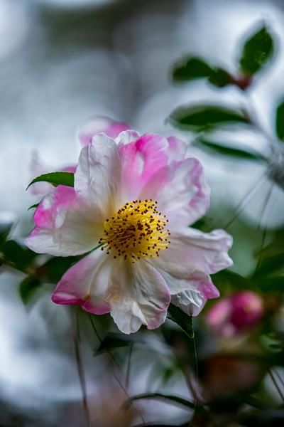 FlowerRedWingPark-002