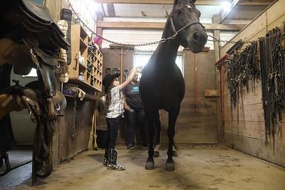 Fiona   Horses