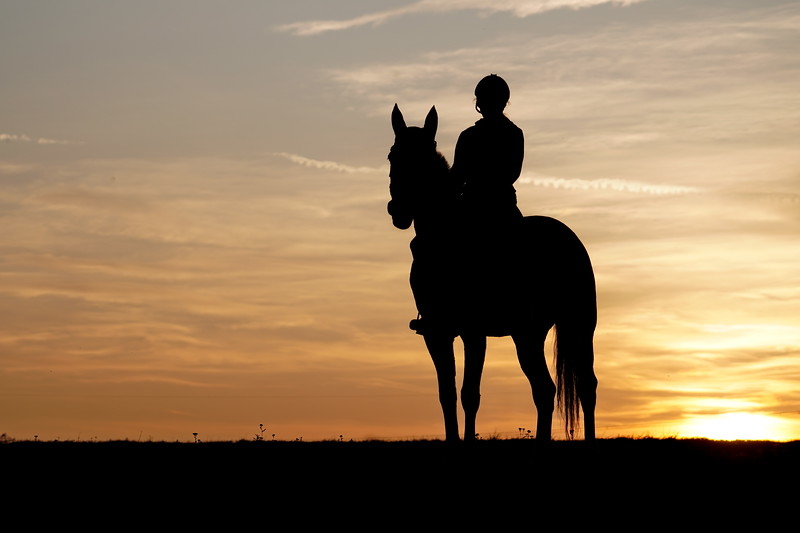 Sunet and Horse
