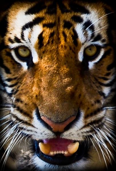 Wildlife SA