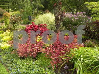 summer-brings-colorful-displays-to-idea-garden