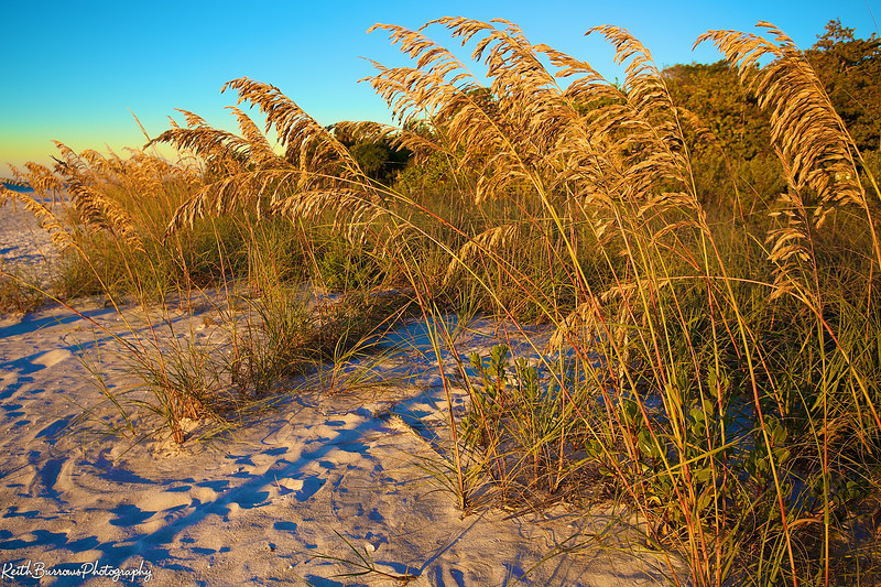 Sanibel Feb_2013_ 8.jpg