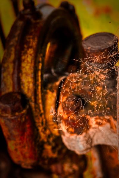 Spiderweb, Casa de Fruita, Hollister, California, 2010