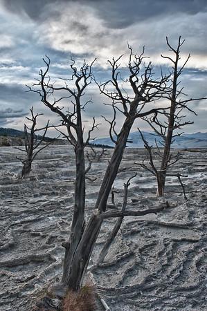 20130816-18 Yellowstone