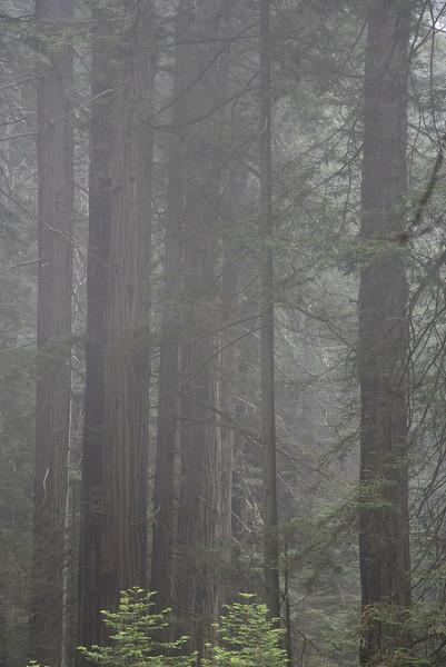 redwoodsFin29-1224.jpg
