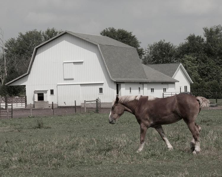 horseandbarnDSC_7631.jpg