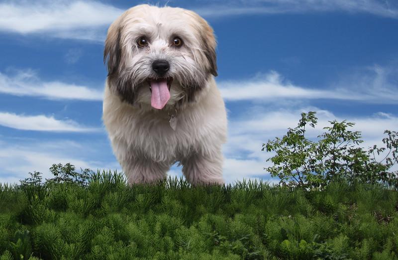 dog-greens.jpg