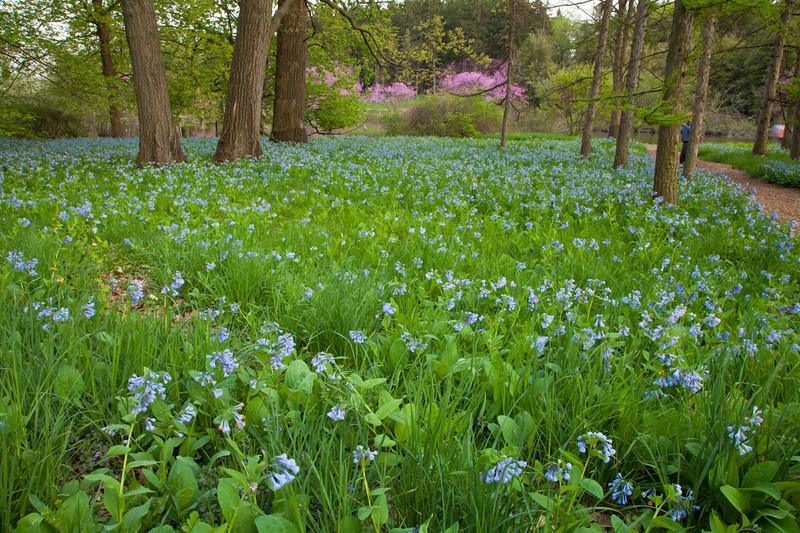 Spring13-0278.jpg