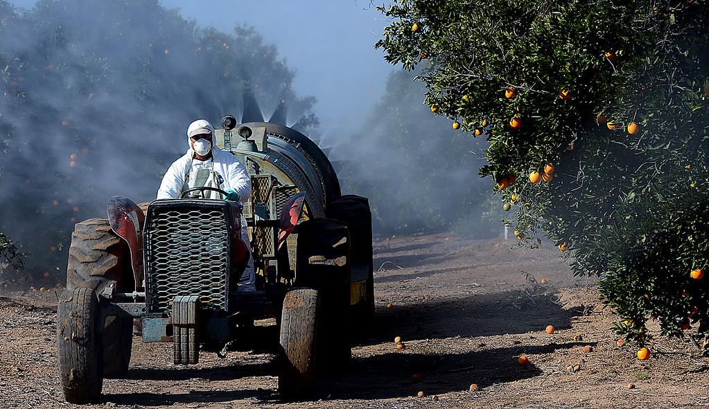 ". Citrus grove workers, for Jacinto Farms, spray a ""freeze guard\"" on trees along Crafton Avenue in Mentone Friday December 6, 2013. (Staff photo by Rick Sforza/The Sun)"