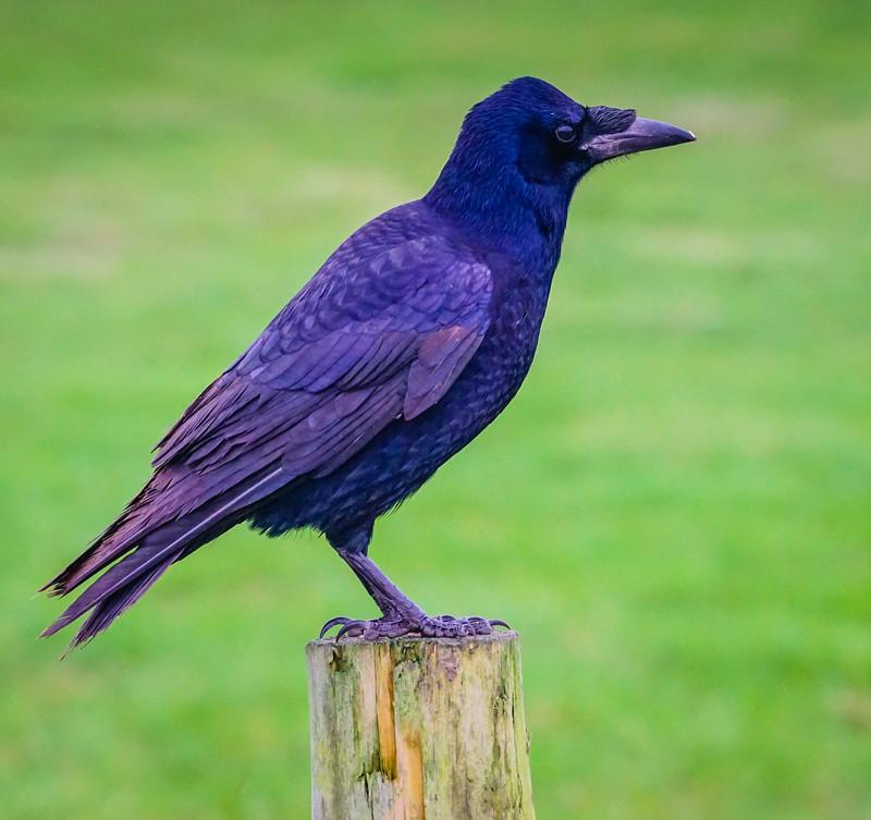 Stonehenge crow side