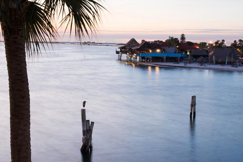 Tampa Landscapes-1400.jpg