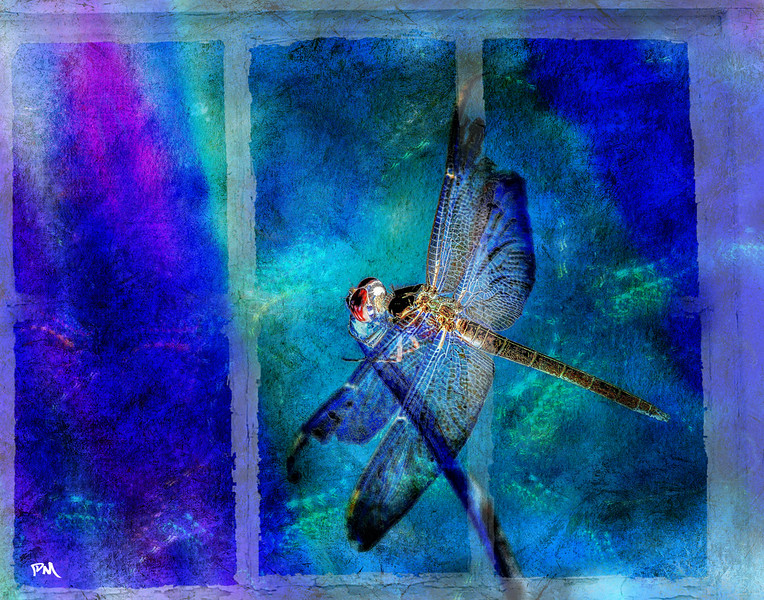 Just a Dragonfly