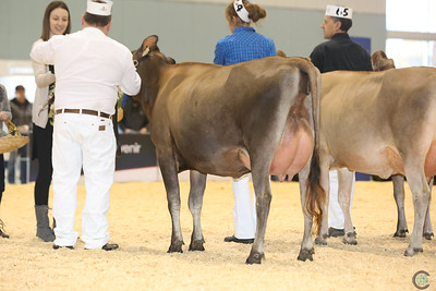 Supreme Jersey Cows 2016