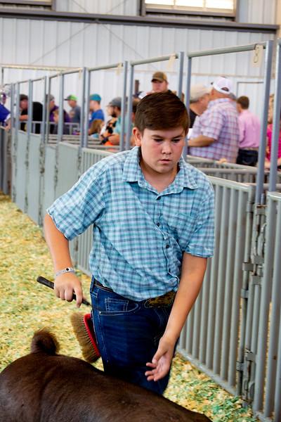 Kansas State Fair Swine 9/7/2019