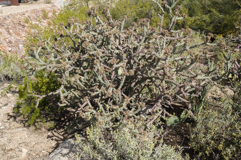 Mar 17 AZ-1040820.jpg