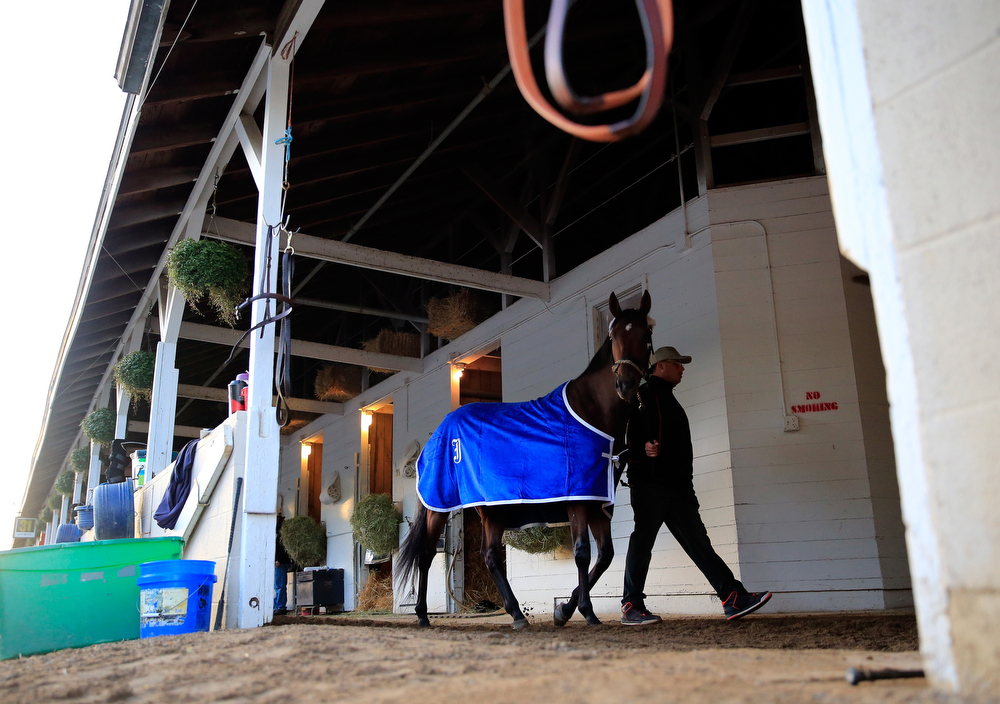 . Kentucky Derby competitor Wicked Strong is hotwalked during early morning workouts ahead of the 140th Kentucky Derby at Churchill Downs on May 2, 2014 in Louisville, Kentucky.  (Photo by Jamie Squire/Getty Images)
