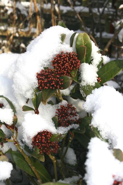 snow Feb 2012__002.JPG