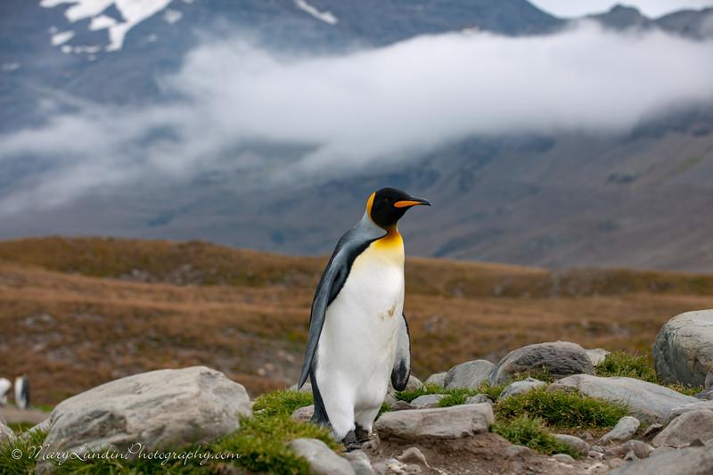 Antarctic-164