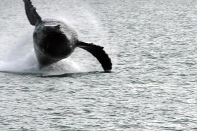 Evening Whale Watching, Juneau, Alaska
