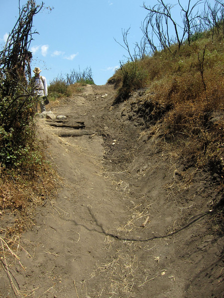 20100710052-Doc Larsen Trailwork CORBA.JPG
