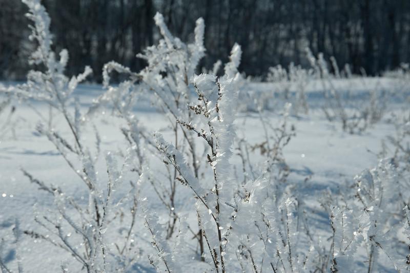 ARR by Penny Jesse-5215 Frosty.jpg