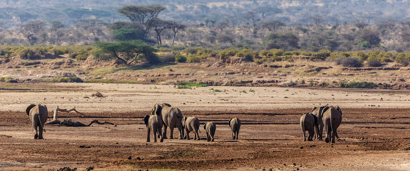Kenya 2015-01518.jpg