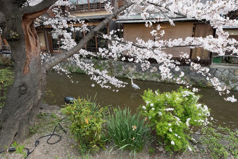 Kyoto Day 8 (60 of 176).jpg