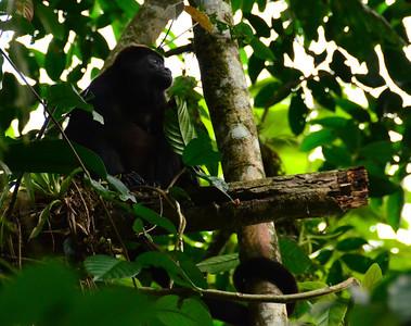 Costa Rica/Selve Verde/Cocoa plantation
