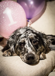 Gertie's First Birthday