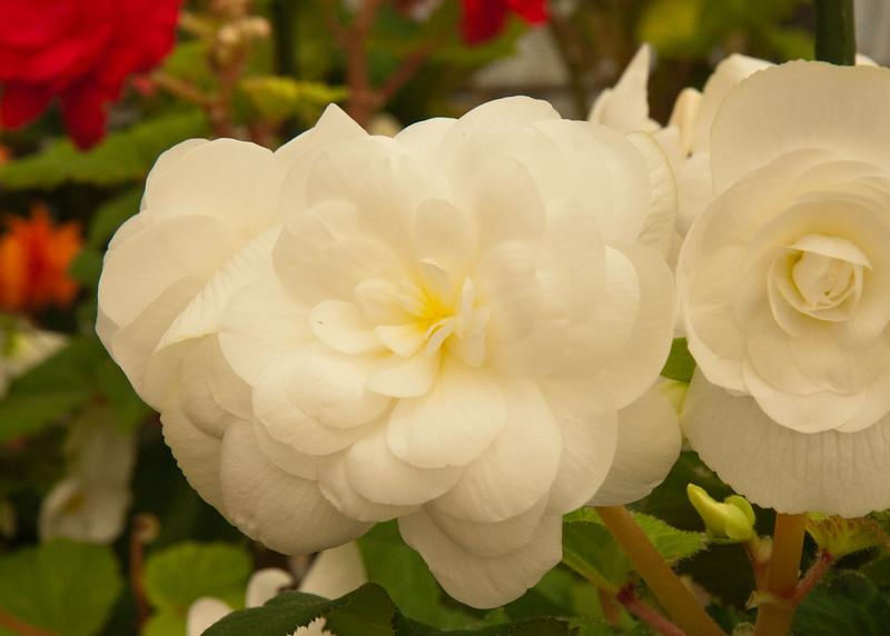 2009 09 06_White Flower Farm_0144_edited-1.jpg