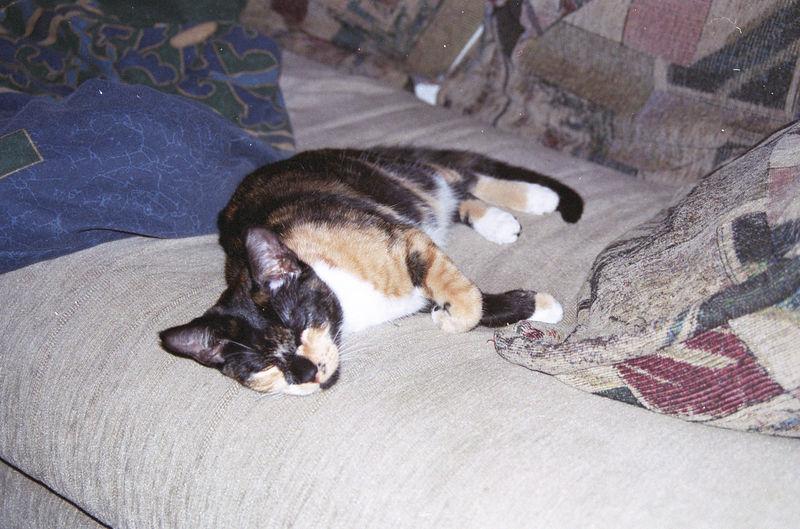 2003 12 - Cats 05.jpg