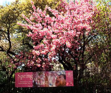 Brooklyn Botanical Garden and Conservatory Garden - April 2010