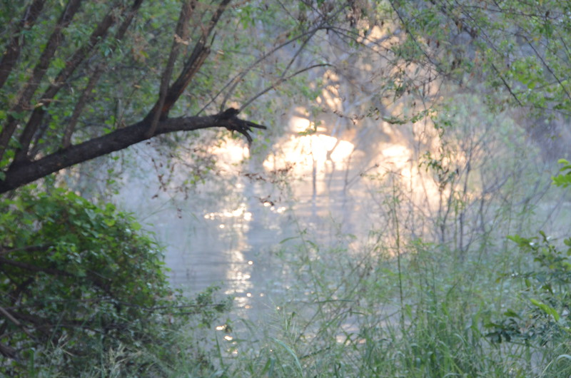 147 - Mist rising - Zambia - Anne Davis