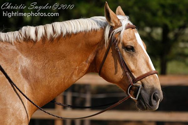 2010 Yadkin Valley Hounds Pony Club
