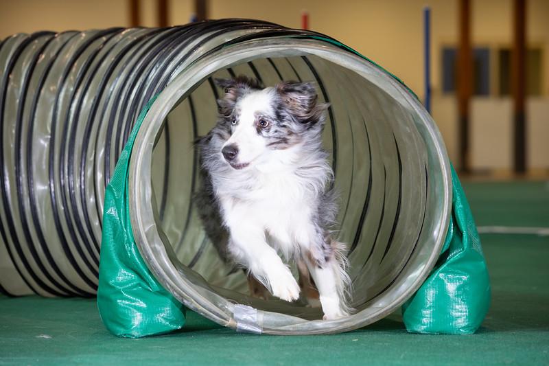 SPCA_Agility-65.jpg