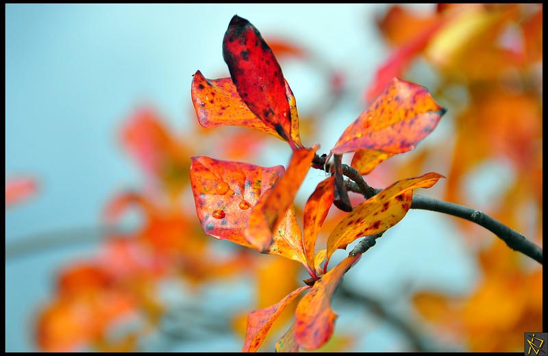 Target Tree Leaves.jpg