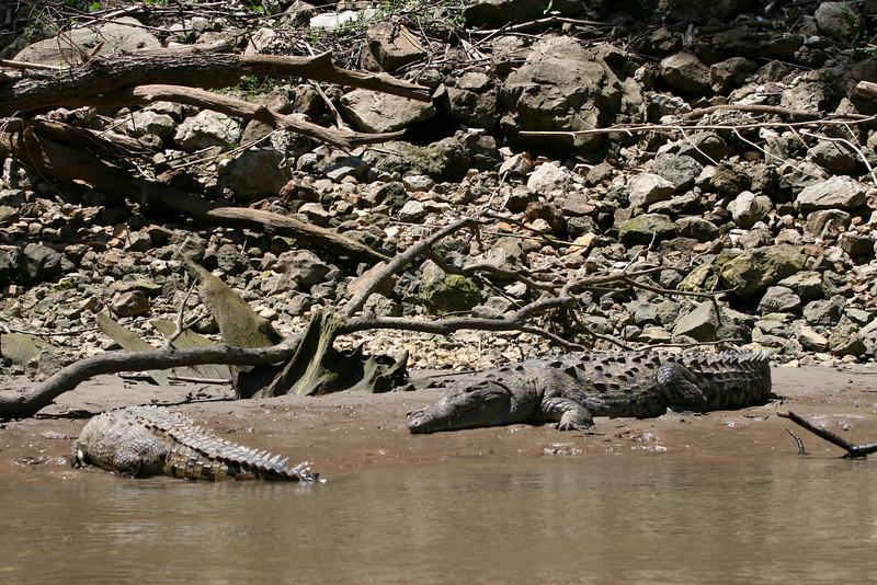 crocodiles / cocodrilos / crocodiles / Krokodile