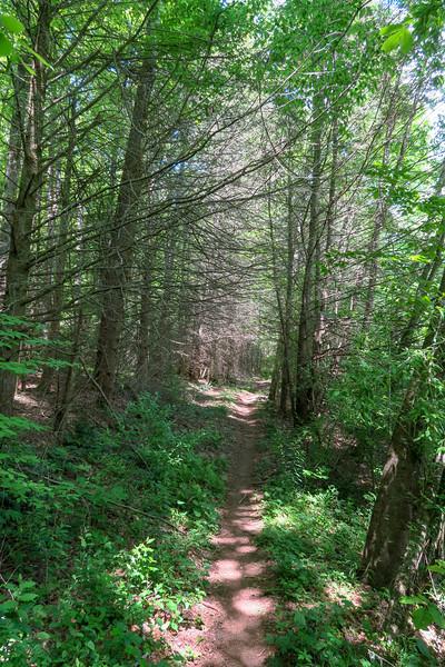 Fletcher Creek Trail -- 2,620'