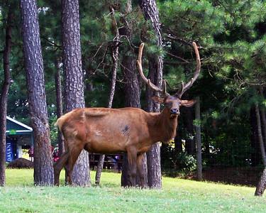 Wild Animal Safari 2013