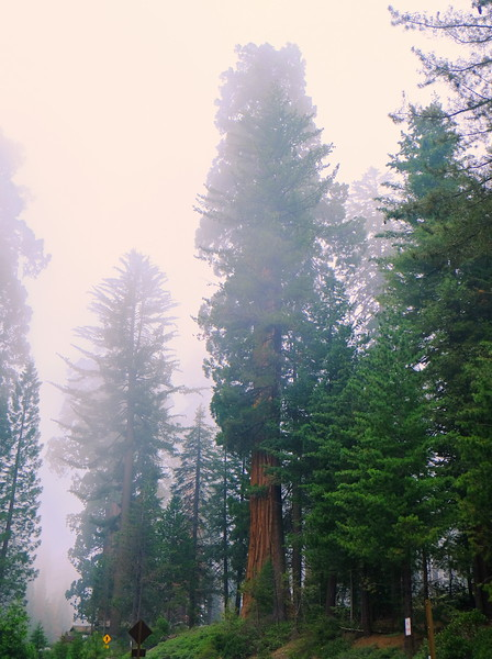 California Day 6 Sequoia 05-30-2017 125.JPG